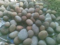 Pebble Stone 1